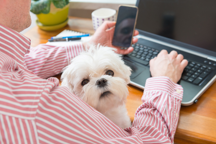 5 Simple Ways to Market Your Pet Business Online